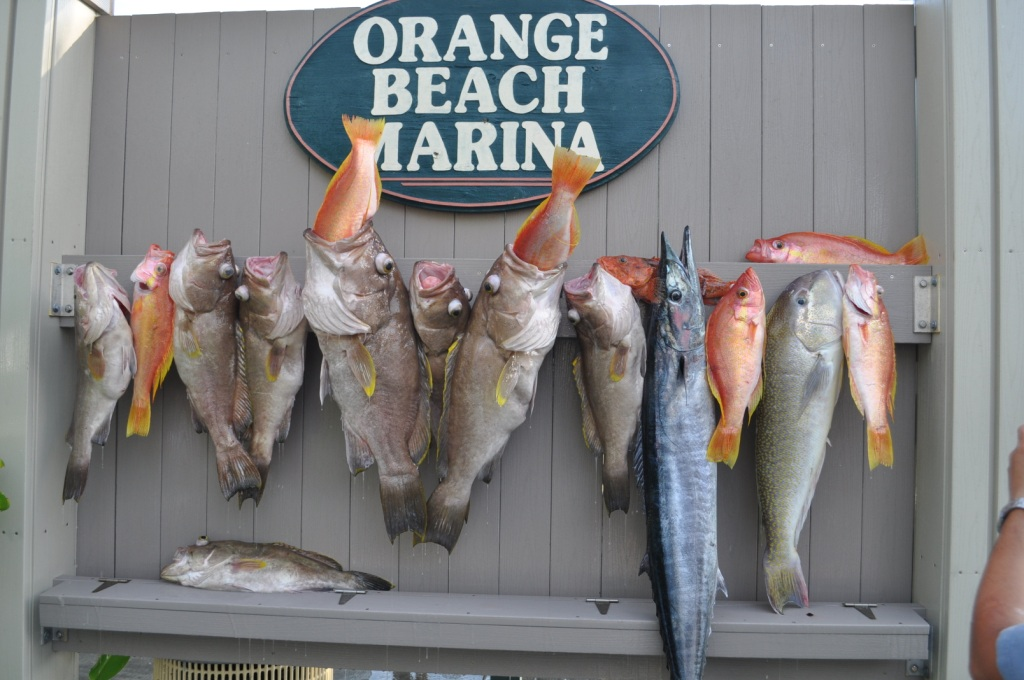 Snowy grouper tilefish longtail bass and scorpionfish for Types of fish in the gulf of mexico